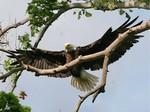 EagleHawkPhotoByKeithWedoe12