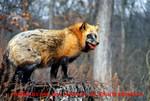 FoxPhotobyDonJohnson2